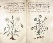 Dioscorides' Materia Medica, c. 1334 copy in Arabic