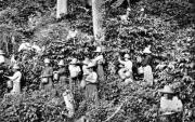 coffee plantation Bogota circa 1900