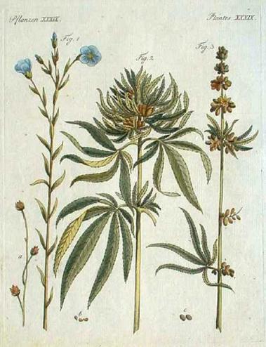 Cannabis Sativa and Linum Usitatissimum by Jakob Xaver Schmuzer(1799)