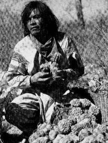 peyote indian