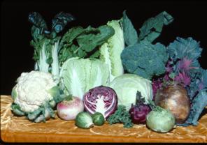 Brassicas, broccoli, kale, lettuce, cabbage, mustard, greens, vegetables