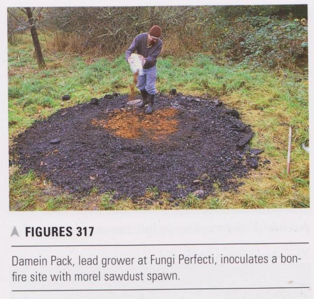 Morels to reclaim burnt areas