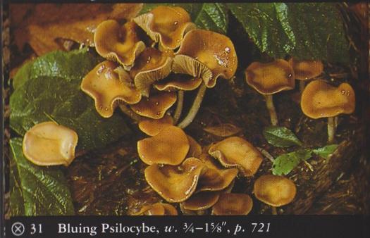 Mushrooms/Fungi   Herb Museum
